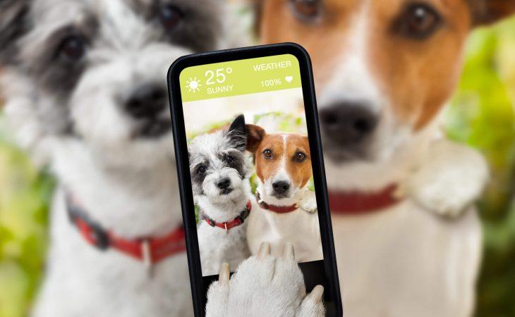 האם הדיוור שלכם מותאם לטלפונים ניידים?
