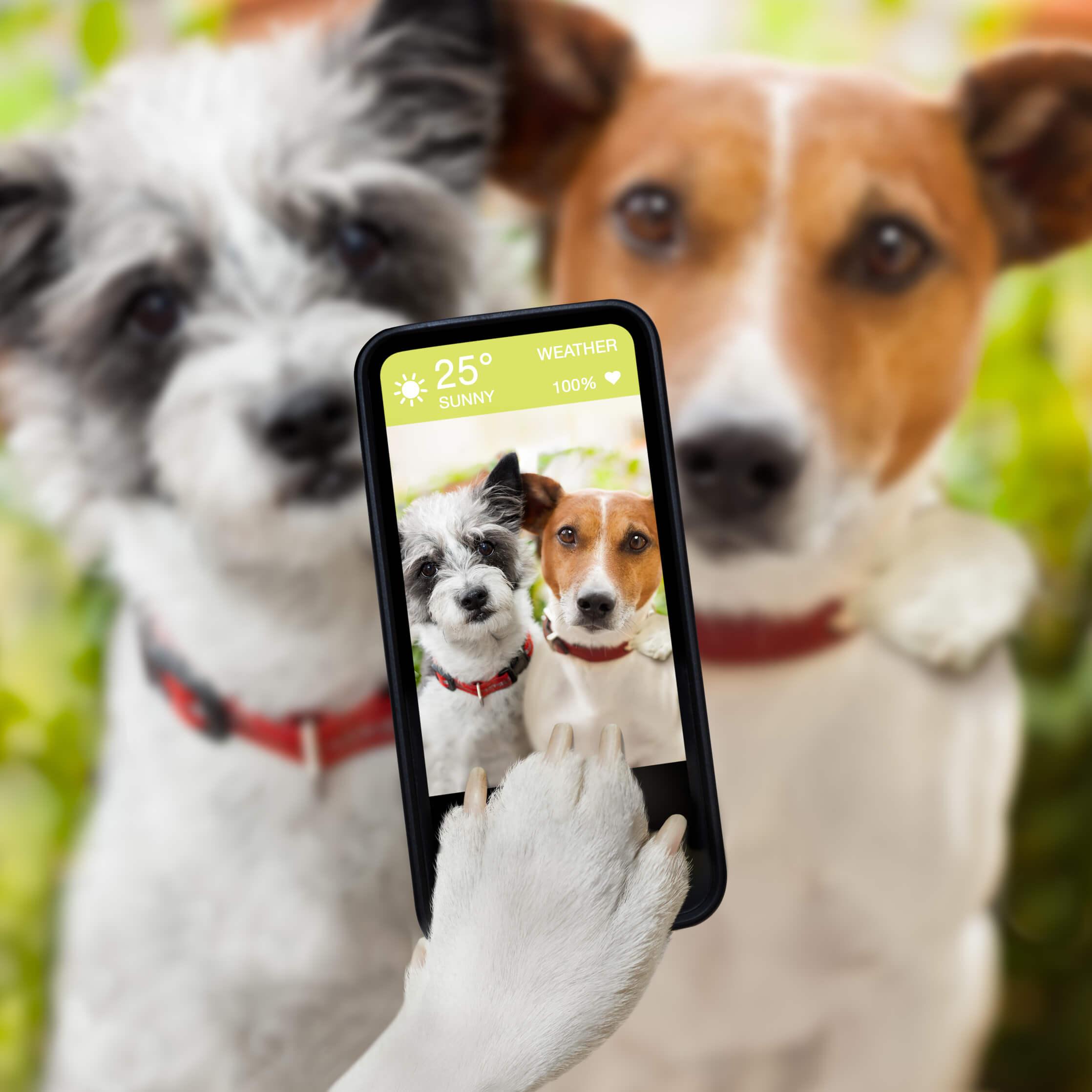 כלבים בטלפון חכם